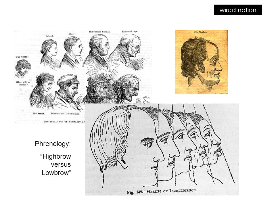 wired nation Phrenology: Highbrow versus Lowbrow