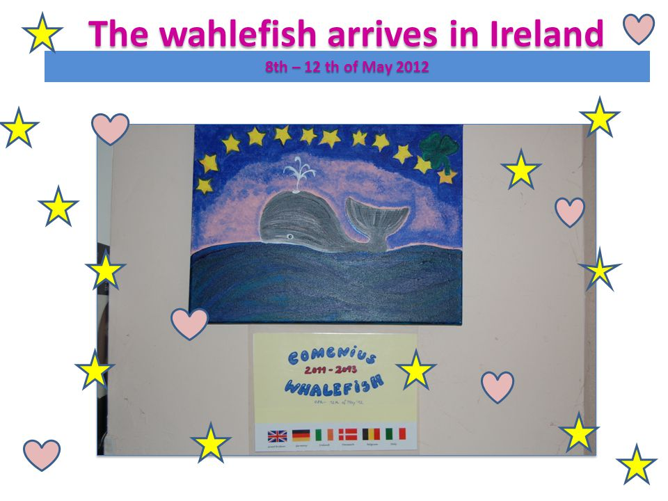 The wahlefish arrives in Ireland 8th – 12 th of May 2012