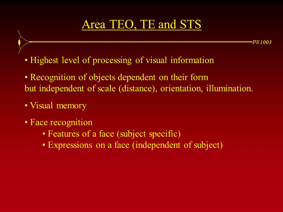 PS 1003 Area TEO, TE and STS Highest level of processing of visual information Recognition of objects dependent on their form but independent of scale (distance), orientation, illumination.