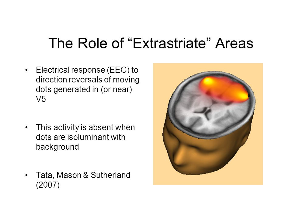 Electrical response (EEG) to direction reversals of moving dots generated in (or near) V5 This activity is absent when dots are isoluminant with background Tata, Mason & Sutherland (2007) The Role of Extrastriate Areas