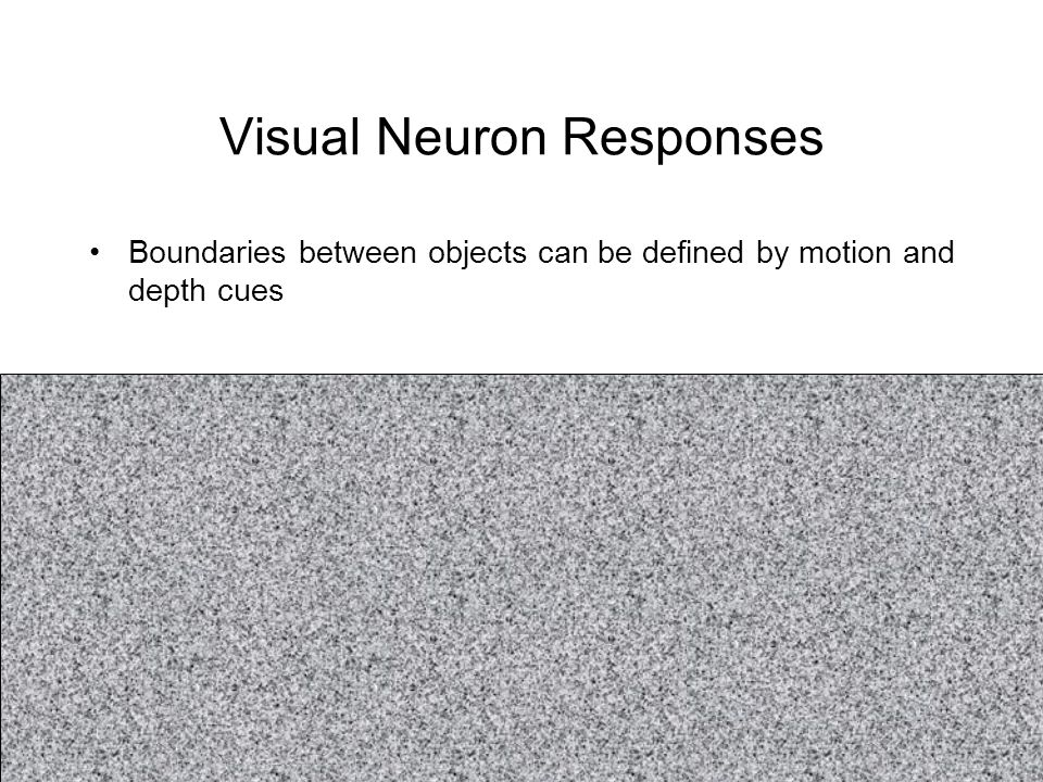 Visual Neuron Responses Boundaries between objects can be defined by motion and depth cues