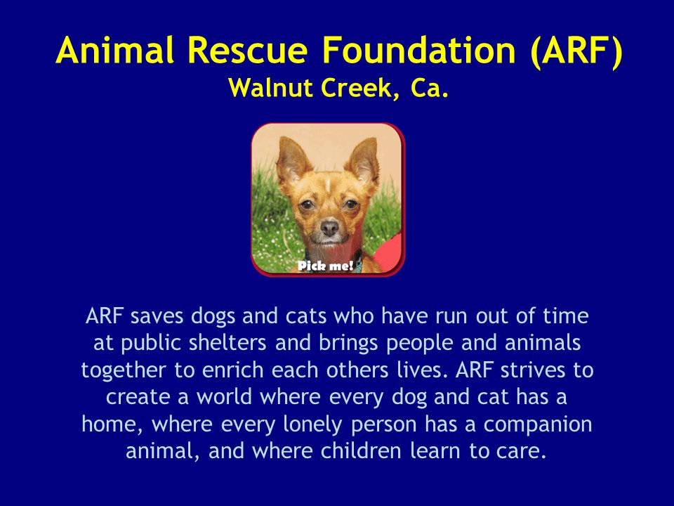 Animal Rescue Foundation (ARF) Walnut Creek, Ca.