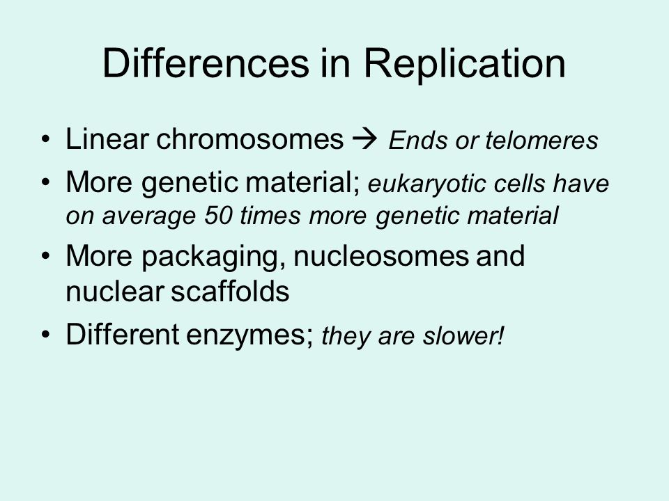 Differences in Replication Linear chromosomes  Ends or telomeres More genetic material; eukaryotic cells have on average 50 times more genetic material More packaging, nucleosomes and nuclear scaffolds Different enzymes; they are slower!