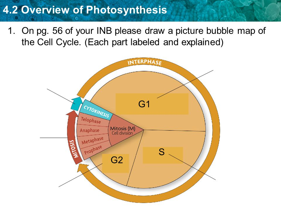 4.2 Overview of Photosynthesis 1.On pg.
