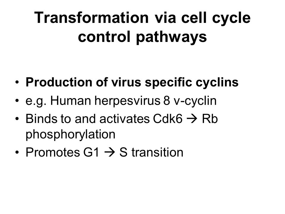 Transformation via cell cycle control pathways Production of virus specific cyclins e.g.