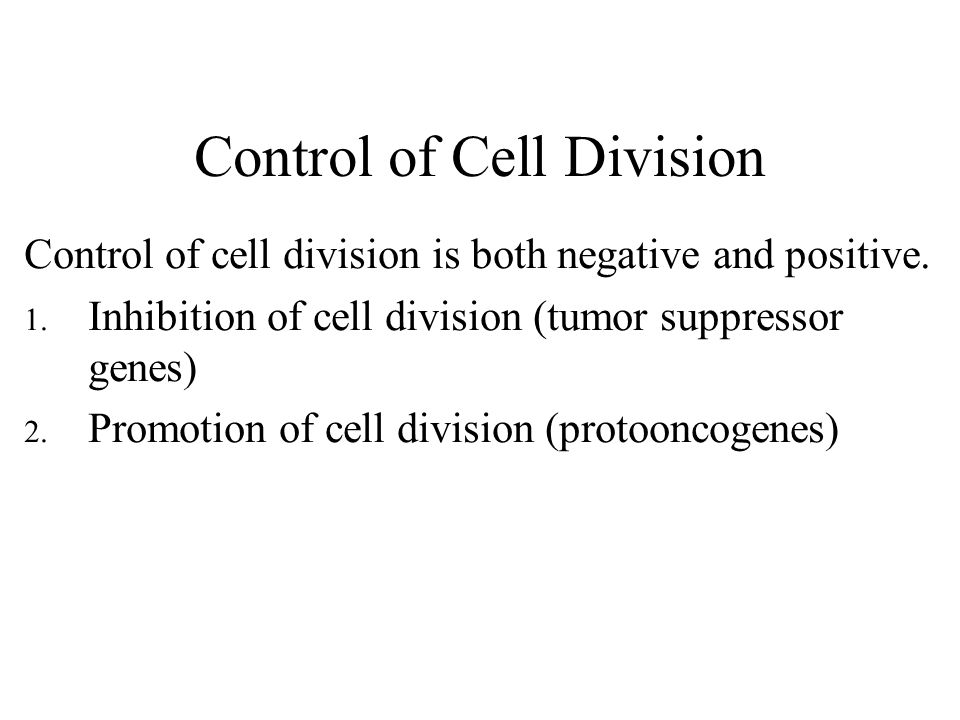Control of Cell Division Control of cell division is both negative and positive.