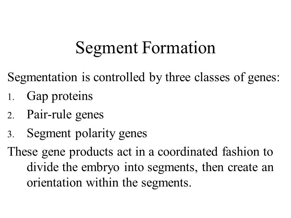 Segment Formation Segmentation is controlled by three classes of genes: 1.