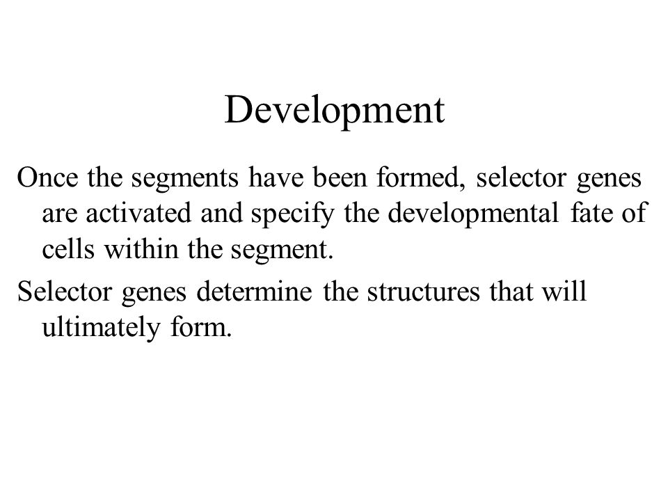 Development Once the segments have been formed, selector genes are activated and specify the developmental fate of cells within the segment.