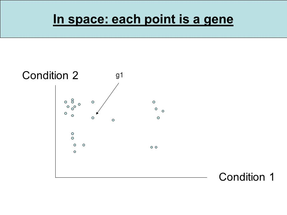 In space: each point is a gene Condition 1 Condition 2 g1
