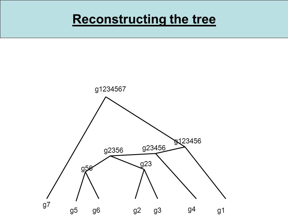 Reconstructing the tree g5g6 g56 g2g3 g2356 g23 g4 g1234567 g1 g23456 g7 g123456