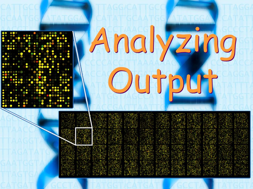 Analyzing Output
