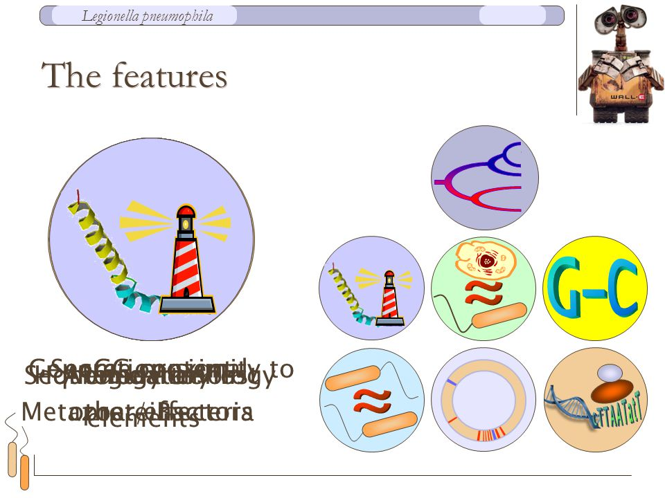 Homology to host proteins Regulatory elements Genome proximity to other effectors Secretion signal Abundance in Metazoa / Bacteria GC content Sequence homology The features Legionella pneumophila