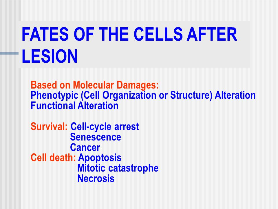 FATES OF THE CELLS AFTER LESION Based on Molecular Damages: Phenotypic (Cell Organization or Structure) Alteration Functional Alteration Survival: Cell-cycle arrest Senescence Cancer Cell death: Apoptosis Mitotic catastrophe Necrosis