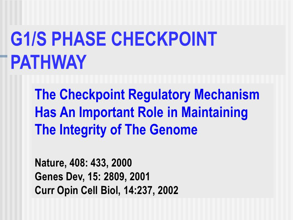 The Checkpoint Regulatory Mechanism Has An Important Role in Maintaining The Integrity of The Genome Nature, 408: 433, 2000 Genes Dev, 15: 2809, 2001 Curr Opin Cell Biol, 14:237, 2002 G1/S PHASE CHECKPOINT PATHWAY