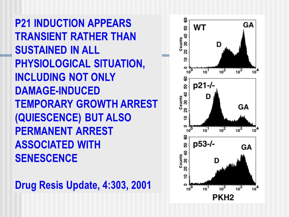 P21 INDUCTION APPEARS TRANSIENT RATHER THAN SUSTAINED IN ALL PHYSIOLOGICAL SITUATION, INCLUDING NOT ONLY DAMAGE-INDUCED TEMPORARY GROWTH ARREST (QUIESCENCE) BUT ALSO PERMANENT ARREST ASSOCIATED WITH SENESCENCE Drug Resis Update, 4:303, 2001
