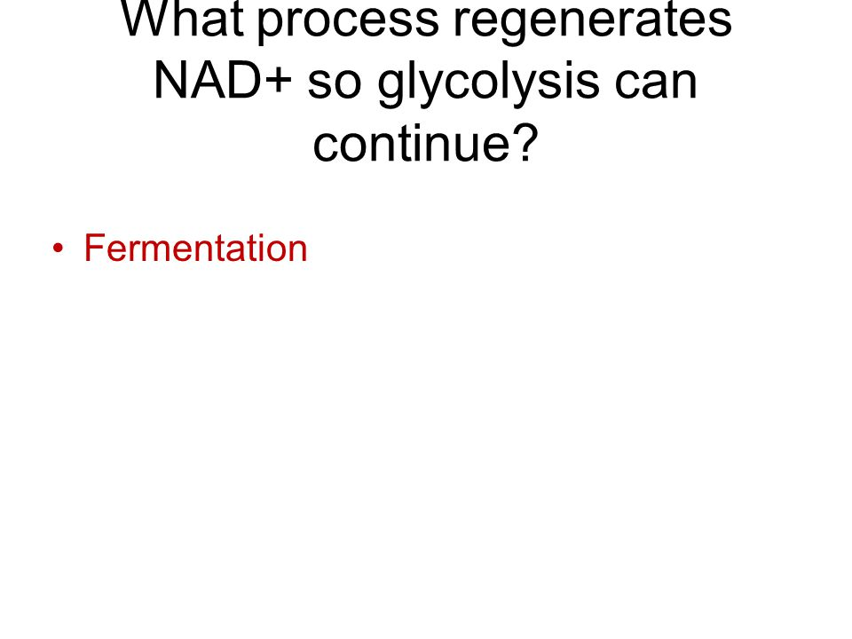 What process regenerates NAD+ so glycolysis can continue Fermentation