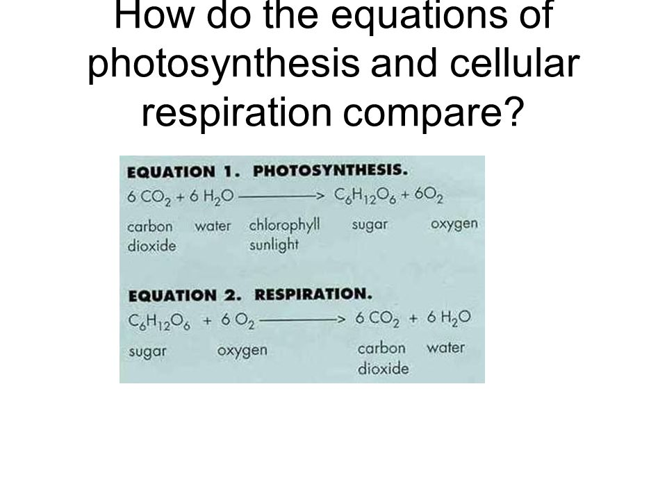 How do the equations of photosynthesis and cellular respiration compare