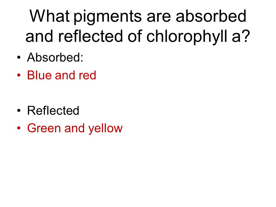 What pigments are absorbed and reflected of chlorophyll a.