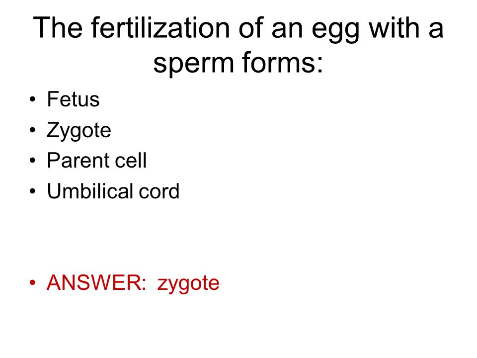 The fertilization of an egg with a sperm forms: Fetus Zygote Parent cell Umbilical cord ANSWER: zygote