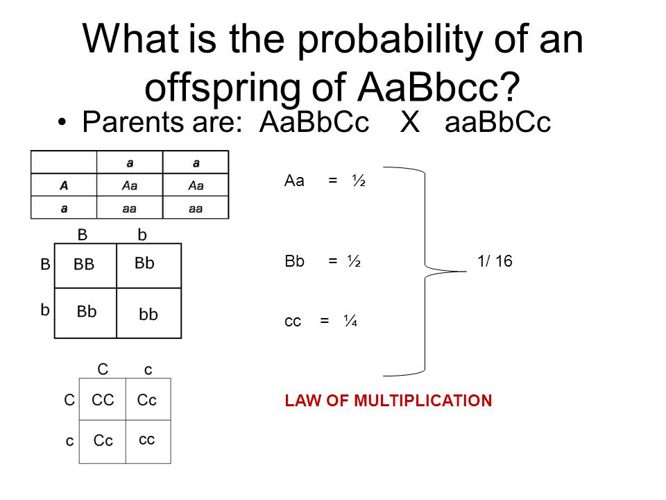 What is the probability of an offspring of AaBbcc.