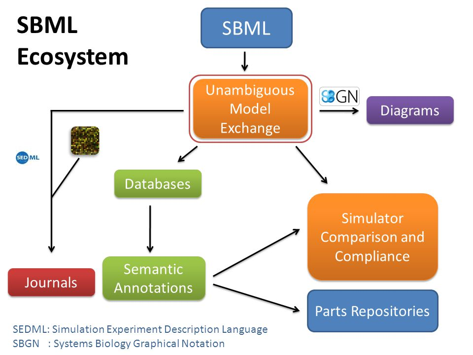 SBML Ecosystem SBML Databases Unambiguous Model Exchange Semantic Annotations Simulator Comparison and Compliance Journals Diagrams SEDML: Simulation Experiment Description Language SBGN : Systems Biology Graphical Notation Parts Repositories