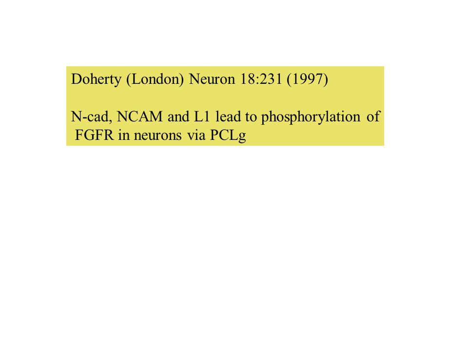 Doherty (London) Neuron 18:231 (1997) N-cad, NCAM and L1 lead to phosphorylation of FGFR in neurons via PCLg