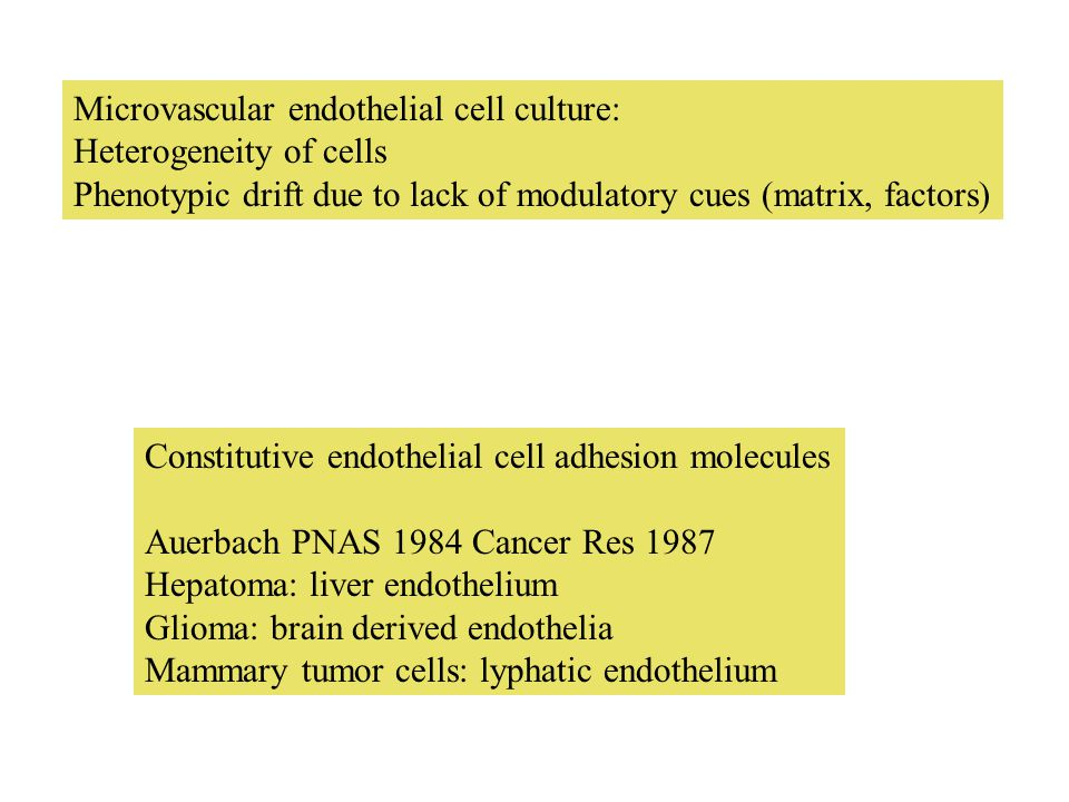 Microvascular endothelial cell culture: Heterogeneity of cells Phenotypic drift due to lack of modulatory cues (matrix, factors) Constitutive endothelial cell adhesion molecules Auerbach PNAS 1984 Cancer Res 1987 Hepatoma: liver endothelium Glioma: brain derived endothelia Mammary tumor cells: lyphatic endothelium