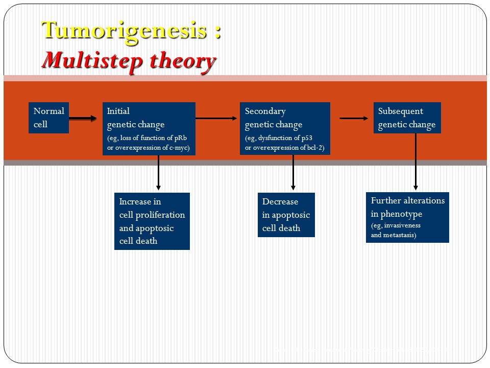 Tumorigenesis : Multistep theory Kastan MB. Cancer: Principles & Practice of Oncology.