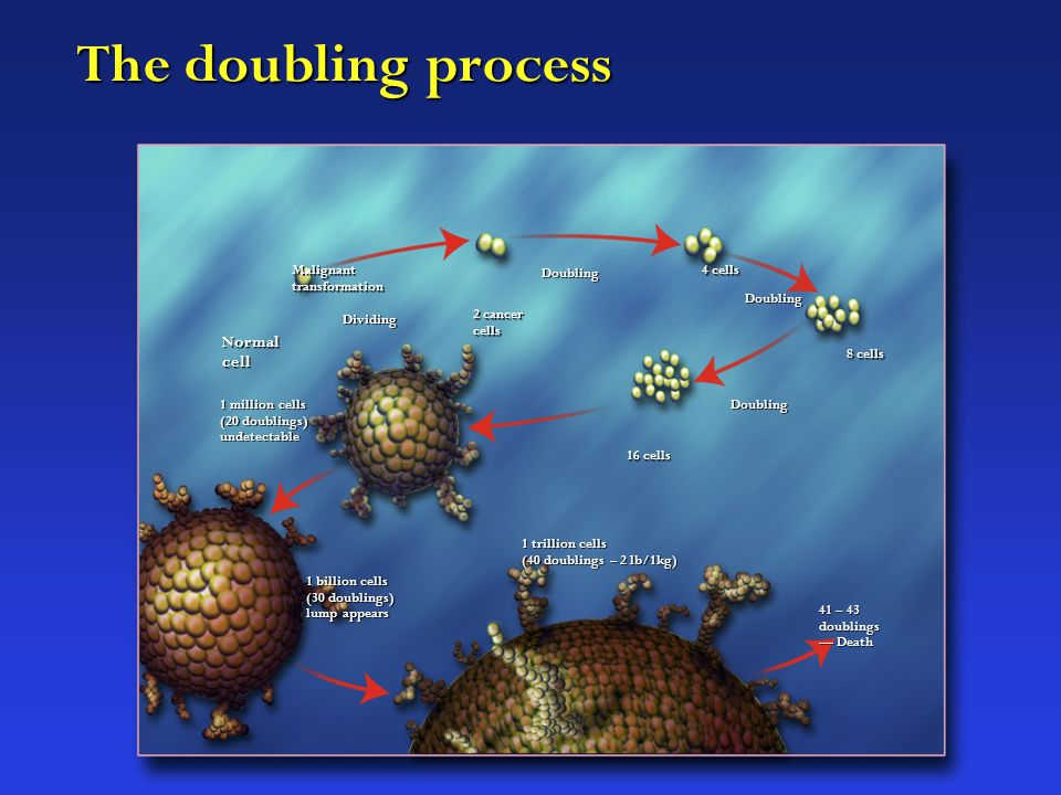 The doubling process Normal cell Dividing Malignant transformation 2 cancer cells Doubling 4 cells Doubling 8 cells Doubling 16 cells 1 million cells (20 doublings) undetectable 1 billion cells (30 doublings) lump appears 1 trillion cells (40 doublings – 2 lb/1kg) 41 – 43 doublings — Death