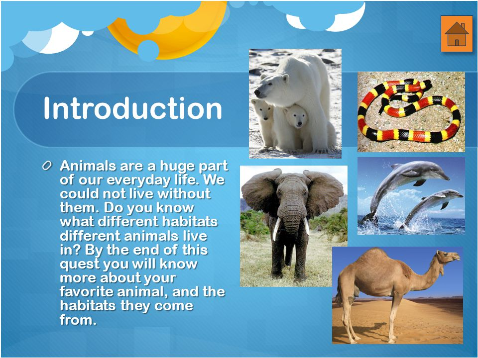 Introduction Animals are a huge part of our everyday life.