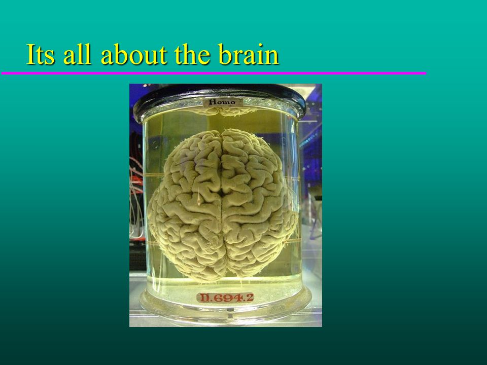 Its all about the brain