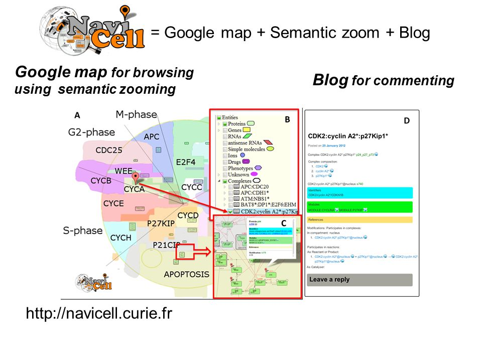 = Google map + Semantic zoom + Blog http://navicell.curie.fr Google map for browsing using semantic zooming Blog for commenting
