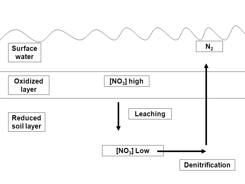 Surface water Oxidized layer Reduced soil layer [NH 4 ] HIGH Low [NH 4 ] Slow Diffusion nitrification [NO 3 ] high