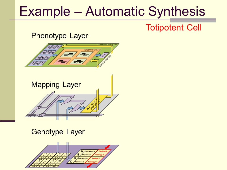 Example – Automatic Synthesis Phenotype Layer Mapping Layer Genotype Layer Totipotent Cell