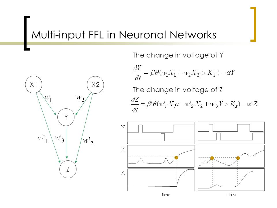 Multi-input FFL in Neuronal Networks The change in voltage of Y The change in voltage of Z Y X1 X2 Z