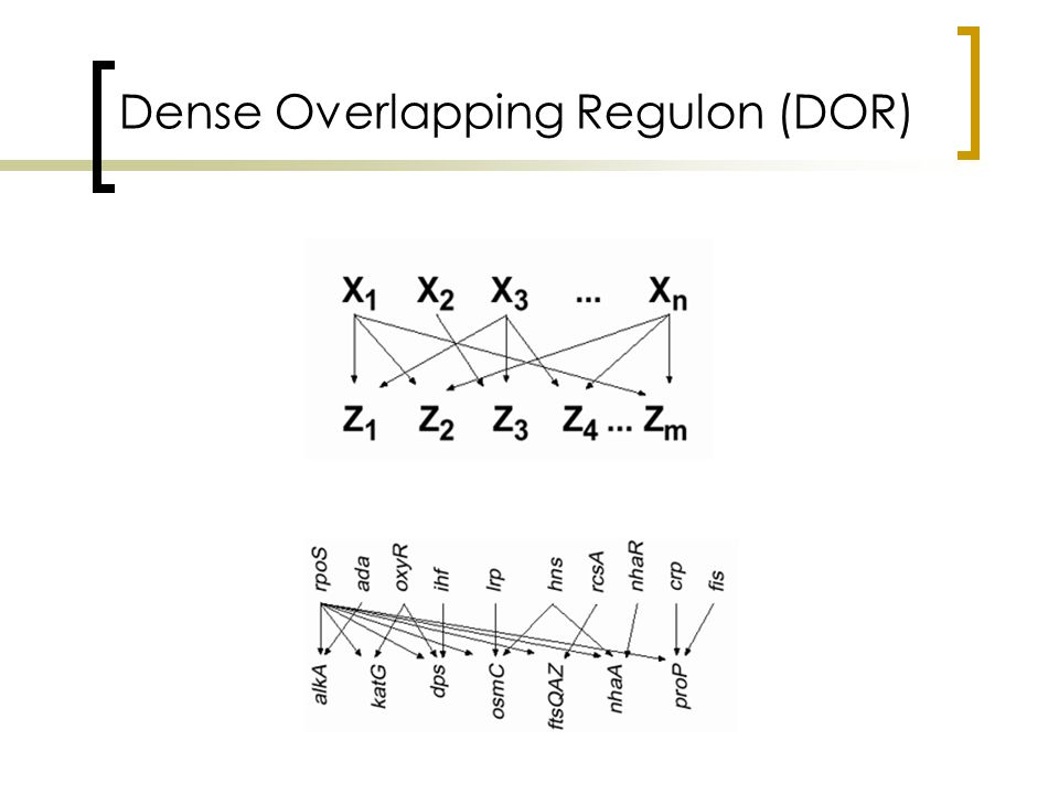 Dense Overlapping Regulon (DOR)