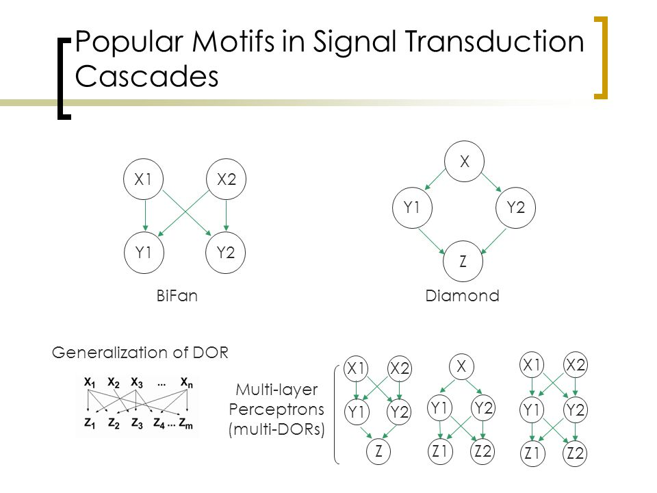 Popular Motifs in Signal Transduction Cascades X1X2 Y1Y2 Generalization of DOR BiFan Y2 Z Y1 Diamond X1X2 Y1Y2 Z Y1Y2 Z1Z2 X Y1Y2 Z1Z2 X1X2 Multi-layer Perceptrons (multi-DORs) X