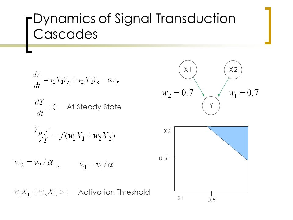 Dynamics of Signal Transduction Cascades At Steady State, Activation Threshold Y X1 X2 X1 X2 0.5