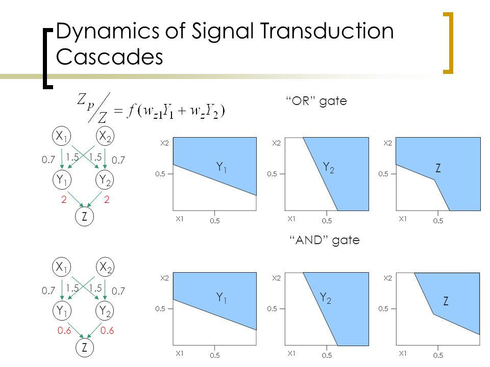 Dynamics of Signal Transduction Cascades X1X1 X2X2 Y1Y1 Y2Y2 Z 0.7 1.5 22 X1X1 X2X2 Y1Y1 Y2Y2 Z 0.7 1.5 0.6 AND gate OR gate Y1Y1 Y2Y2 Z Y1Y1 Y2Y2 Z