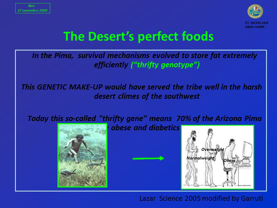 Lazar Science 2005 modified by Garruti In the Pima, survival mechanisms evolved to store fat extremely efficiently ( thrifty genotype ) This GENETIC MAKE-UP would have served the tribe well in the harsh desert climes of the southwest Today this so-called thrifty gene means 70% of the Arizona Pima are obese and diabetics The Desert's perfect foods Et lucem sed aliam reddit… Normalweight Overweight Obese Bari 27 novembre 2009