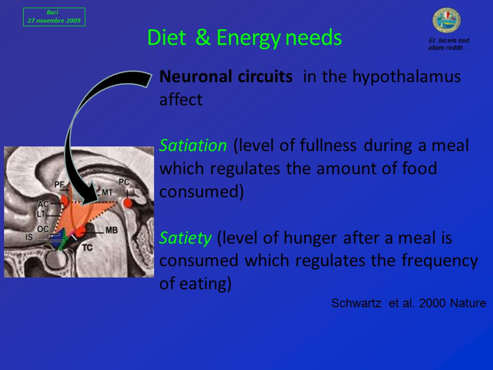 Diet & Energy needs Neuronal circuits in the hypothalamus affect Satiation (level of fullness during a meal which regulates the amount of food consumed) Satiety (level of hunger after a meal is consumed which regulates the frequency of eating) Schwartz et al.