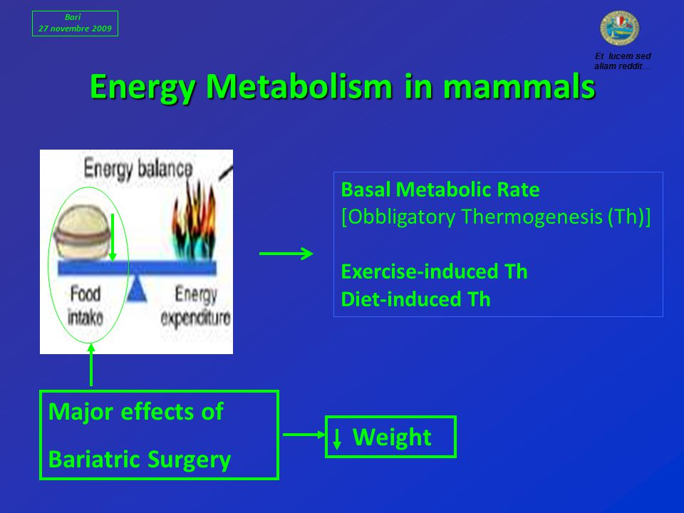 Energy Metabolism in mammals Basal Metabolic Rate [Obbligatory Thermogenesis (Th)] Exercise-induced Th Diet-induced Th Major effects of Bariatric Surgery Weight Et lucem sed aliam reddit… Bari 27 novembre 2009