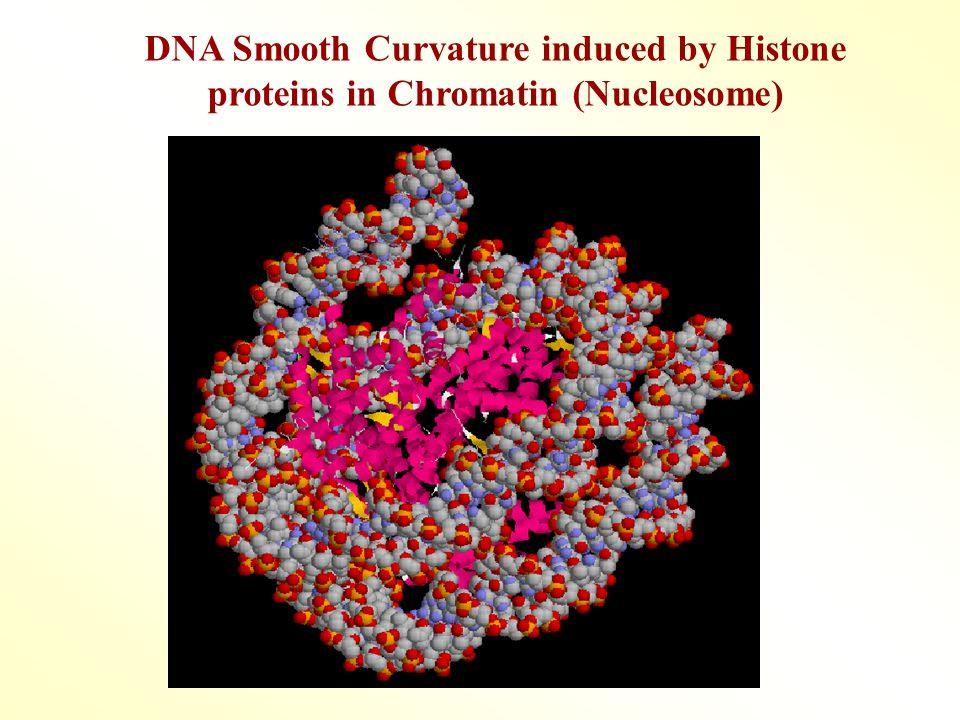 DNA Smooth Curvature induced by Histone proteins in Chromatin (Nucleosome)