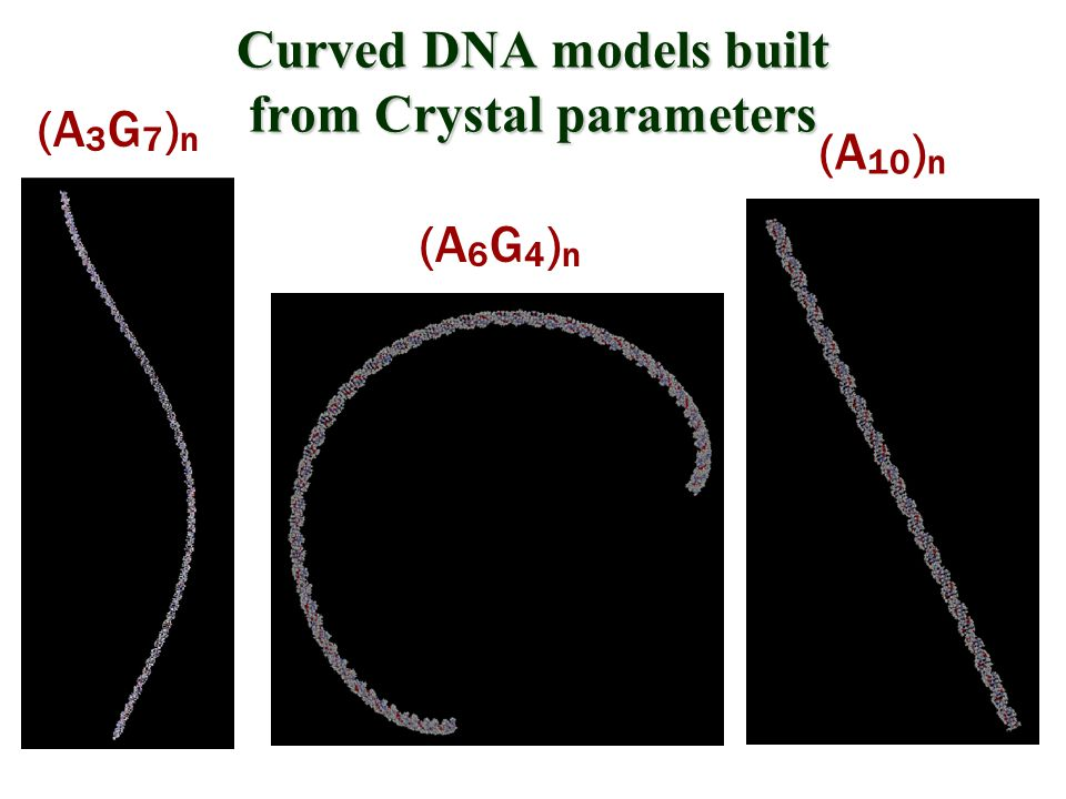 Curved DNA models built from Crystal parameters (A 3 G 7 ) n (A 6 G 4 ) n (A 10 ) n