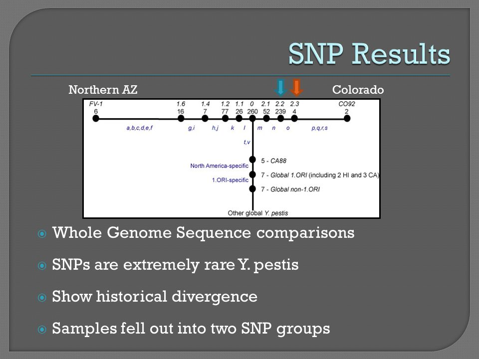  Whole Genome Sequence comparisons  SNPs are extremely rare Y.