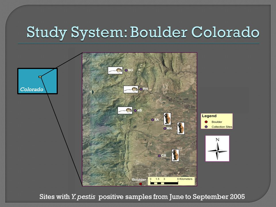 Colorado Sites with Y. pestis positive samples from June to September 2005
