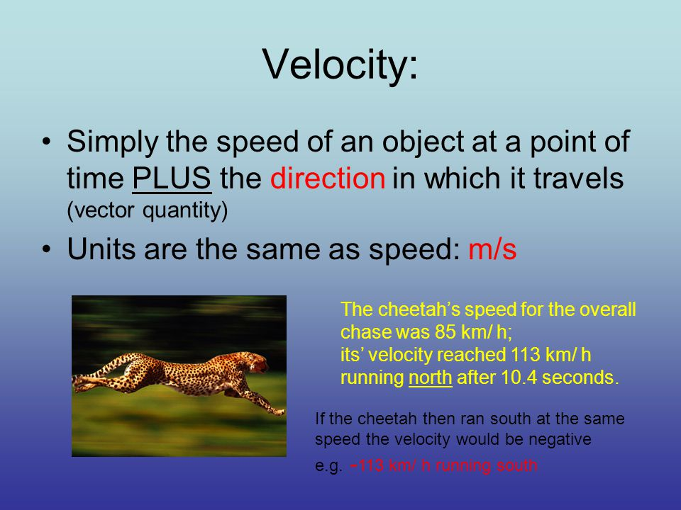 Velocity: Simply the speed of an object at a point of time PLUS the direction in which it travels (vector quantity) Units are the same as speed: m/s The cheetah's speed for the overall chase was 85 km/ h; its' velocity reached 113 km/ h running north after 10.4 seconds.