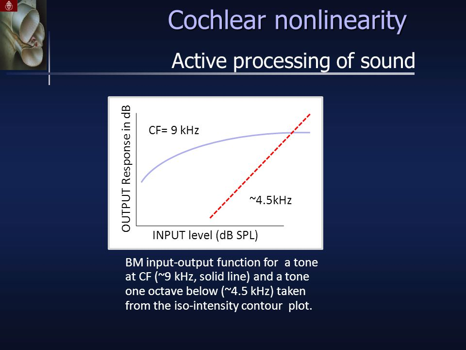 Cochlear nonlinearity Active processing of sound BM input-output function for a tone at CF (~9 kHz, solid line) and a tone one octave below (~4.5 kHz) taken from the iso-intensity contour plot.