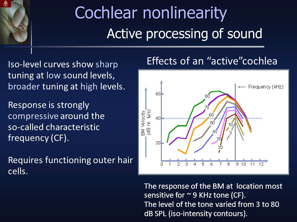 Effects of an active cochlea Iso-level curves show sharp tuning at low sound levels, broader tuning at high levels.