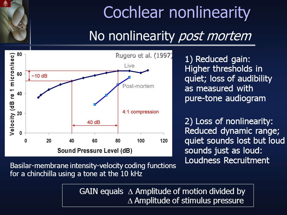 Cochlear nonlinearity 1) Reduced gain: Higher thresholds in quiet; loss of audibility as measured with pure-tone audiogram 2) Loss of nonlinearity: Reduced dynamic range; quiet sounds lost but loud sounds just as loud: Loudness Recruitment GAIN equals  Amplitude of motion divided by  Amplitude of stimulus pressure No nonlinearity post mortem Basilar-membrane intensity-velocity coding functions for a chinchilla using a tone at the 10 kHz Rugero et al.